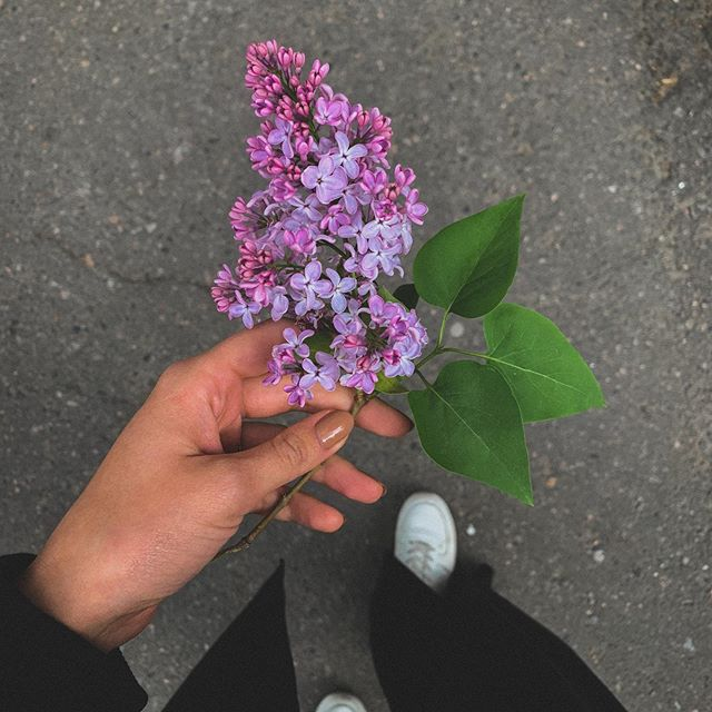 Сирень цветёт и ты цвети