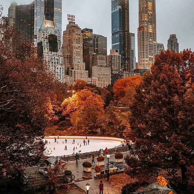 Самое красивое сочетание для меня : осенние листья и серый туман Нью-Йорка поглощающий верхние этажи билдингов ... 🍁🥜🌫